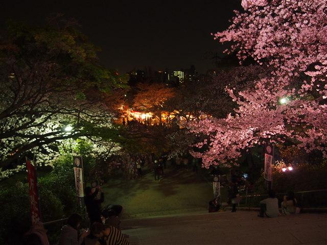 西公園桜2014-28