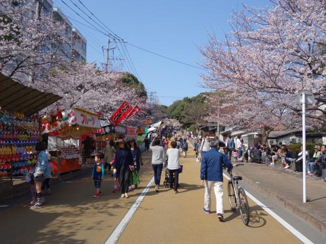 西公園桜2015-2