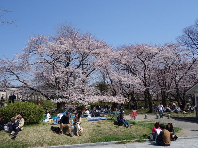 福岡城さくらまつり2015-7