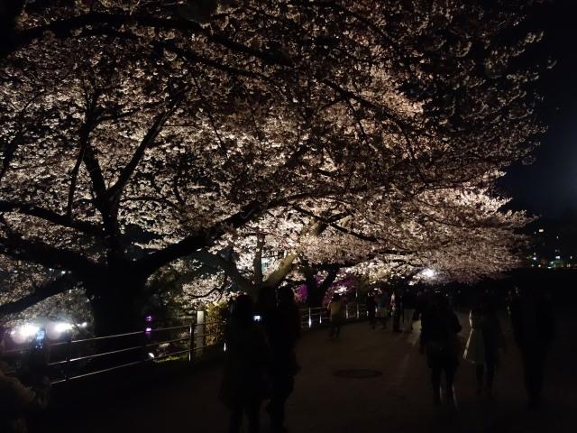 福岡城さくらまつり2015(夜桜)お堀1