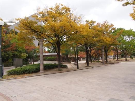 アクロス福岡9