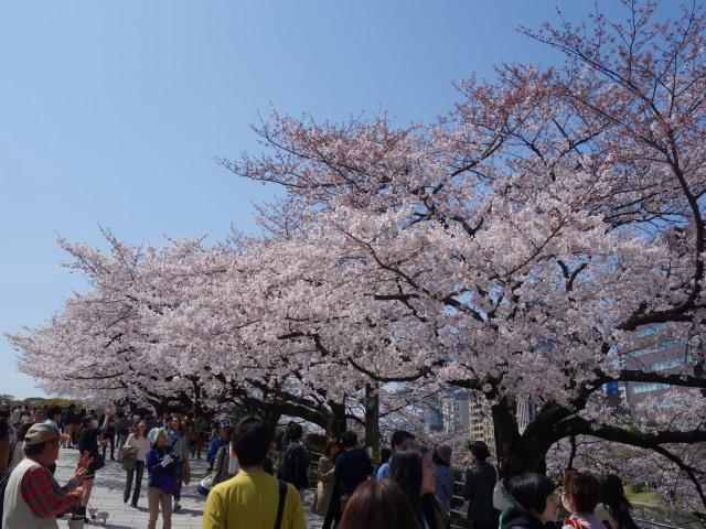 福岡城さくらまつり2015上之橋5