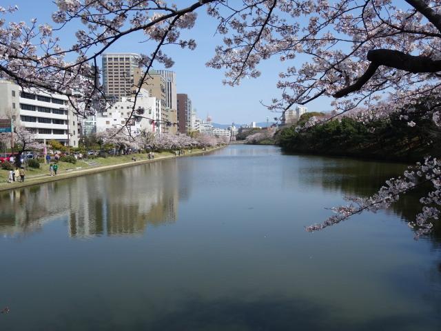 福岡城さくらまつり2015下之橋1