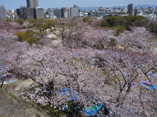 福岡城さくらまつり2015天守台2
