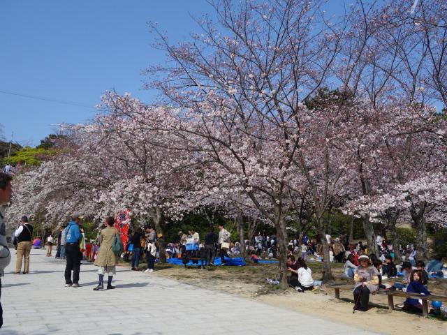 西公園桜2015階段下広場2