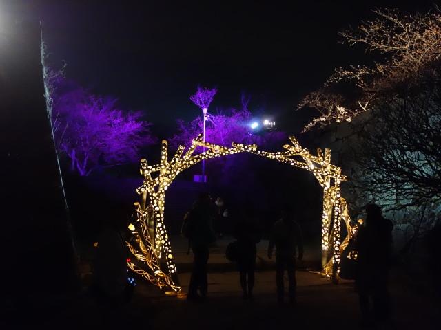 第7回 福岡城さくらまつり夜桜様子7