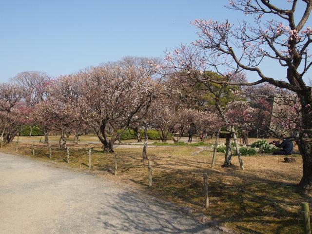 福岡城梅の花2014下9