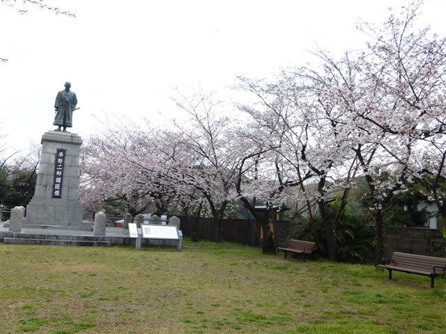 西公園桜2014-16