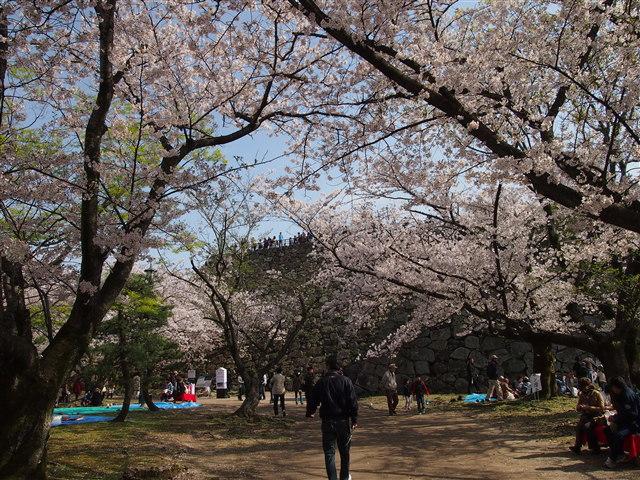 第5回 福岡城さくらまつり桜9