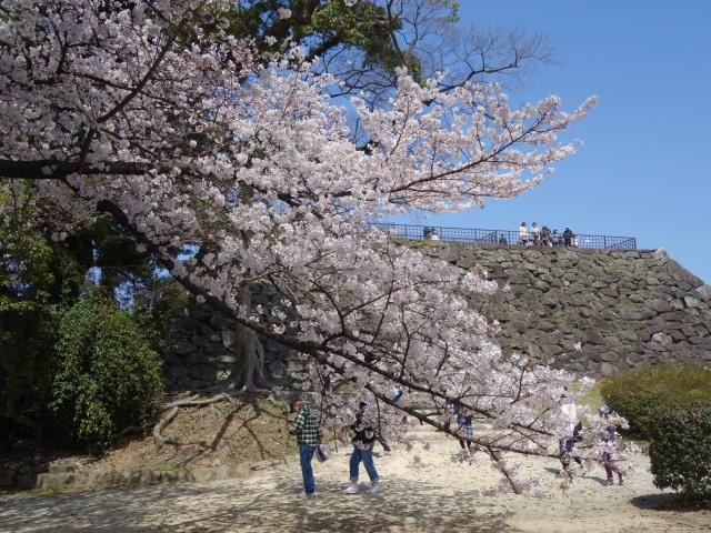 福岡城さくらまつり2015天守台1