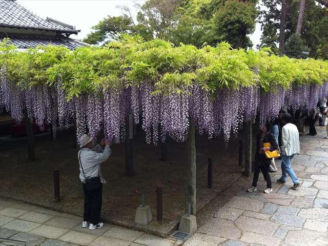 武蔵寺11