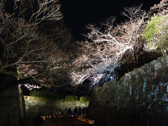 福岡城さくらまつり2015(夜桜)桜1