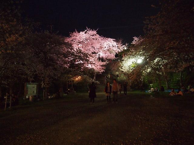 西公園桜2014-24