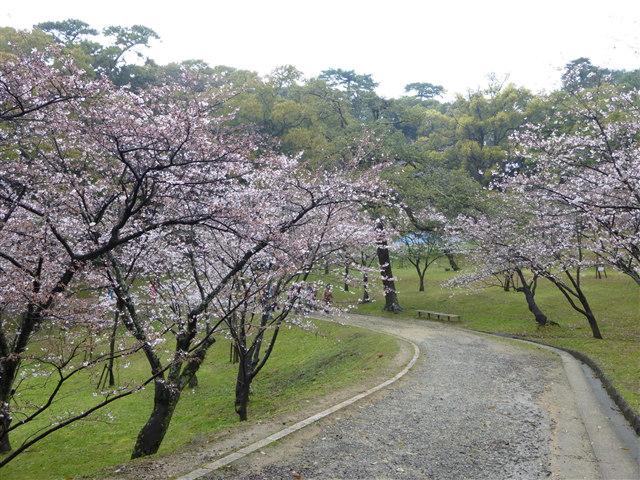 西公園桜2014-20
