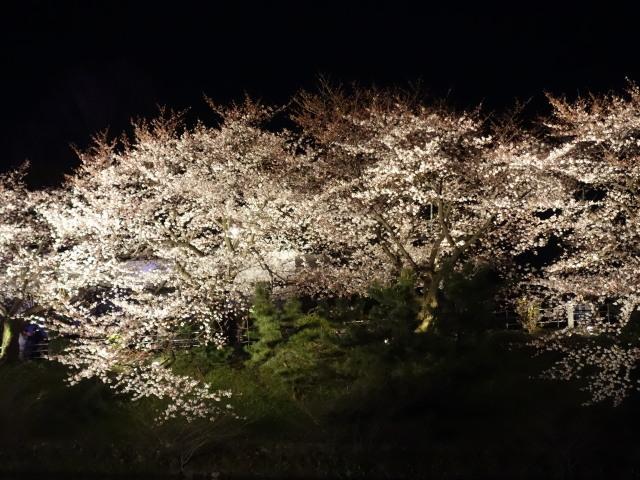 福岡城さくらまつり2015(夜桜)お堀2