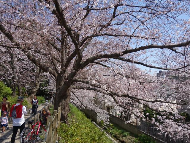 福岡城さくらまつり2015-8
