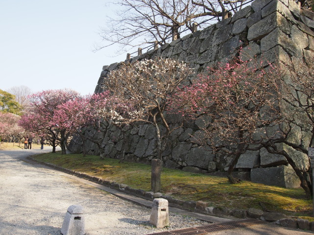 福岡城梅の花2014下2
