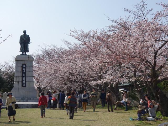 西公園桜2015-3