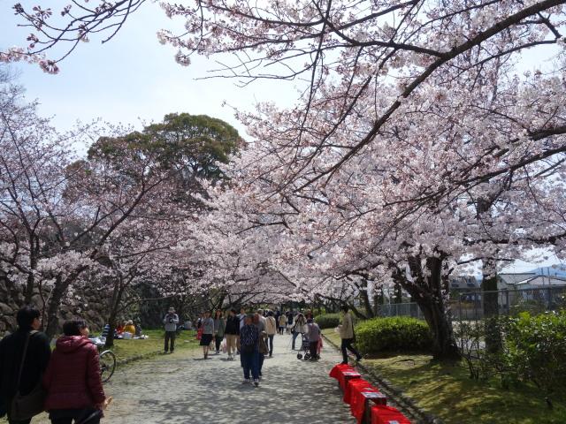 福岡城さくらまつり2015三の丸スクェア1