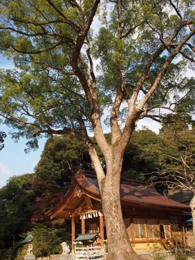 竈門神社15
