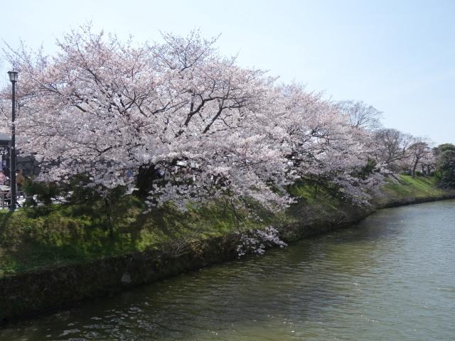 福岡城さくらまつり2015上之橋3