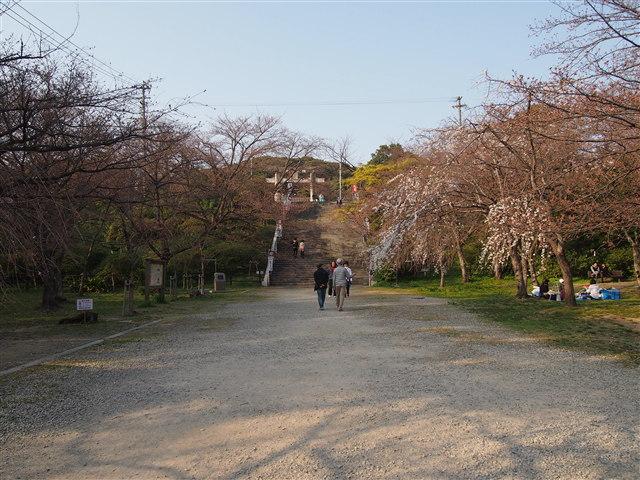 西公園桜2014-5
