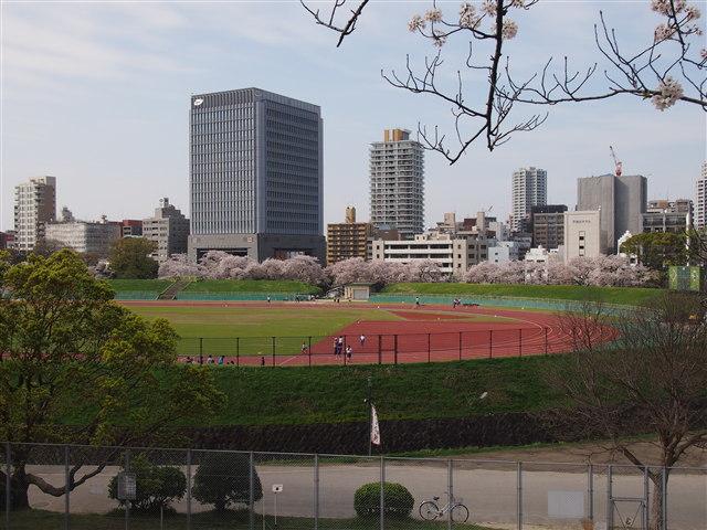 第5回 福岡城さくらまつり桜27