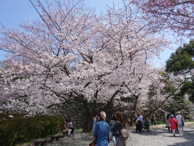 福岡城さくらまつり2015-2