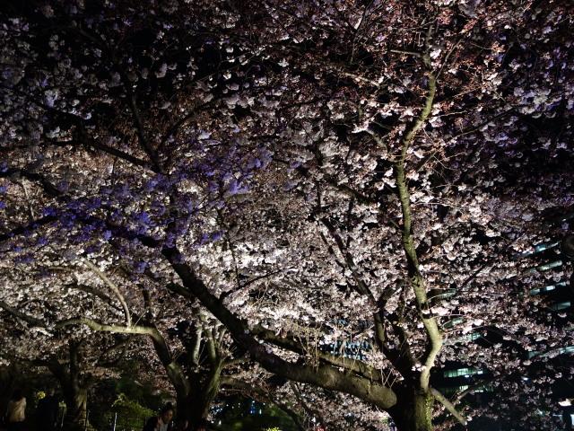 福岡城さくらまつり2015(夜桜)上之橋5