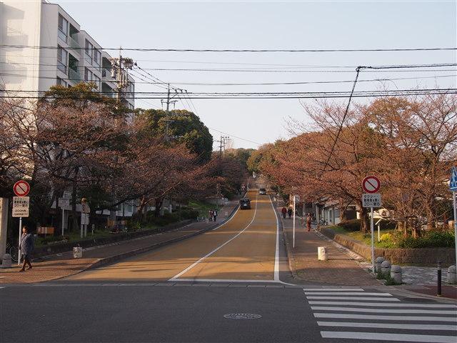 西公園桜2014-2