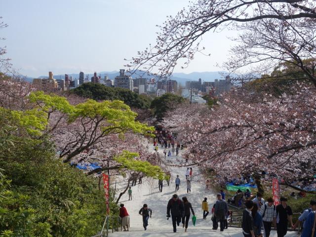 西公園桜2015光雲神社3
