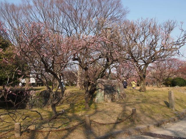 福岡城梅の花2014下3