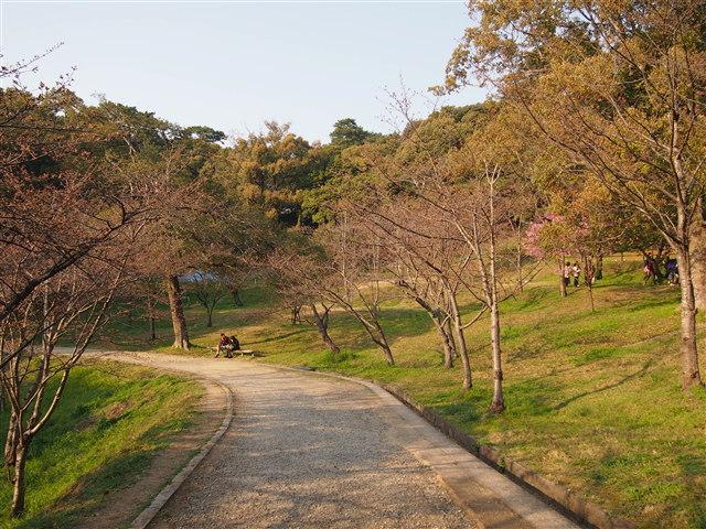 西公園桜2014-13