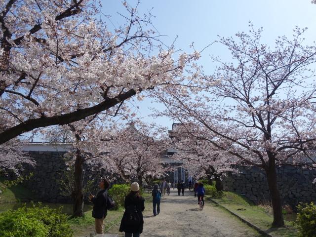 福岡城さくらまつり2015下之橋3