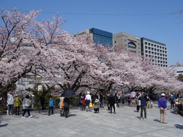福岡城さくらまつり2015上之橋4