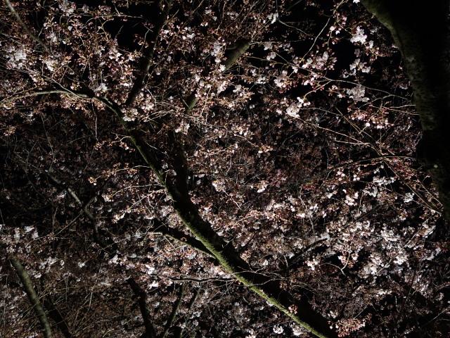 第7回 福岡城さくらまつり夜桜様子6