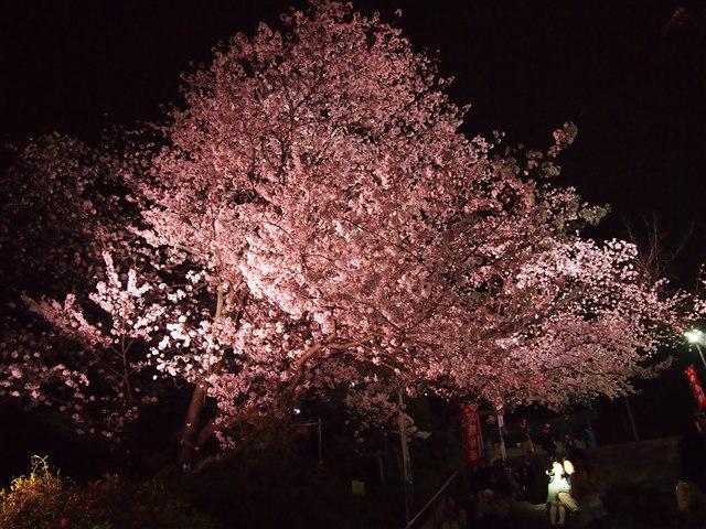 西公園桜2014-25