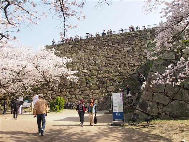 第5回 福岡城さくらまつり桜15