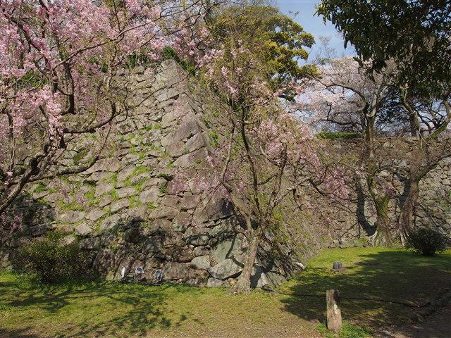 第5回 福岡城さくらまつり桜18