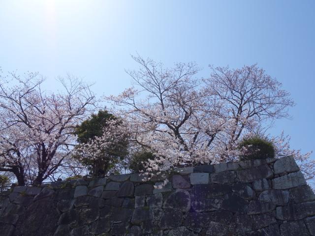 福岡城さくらまつり2015-5