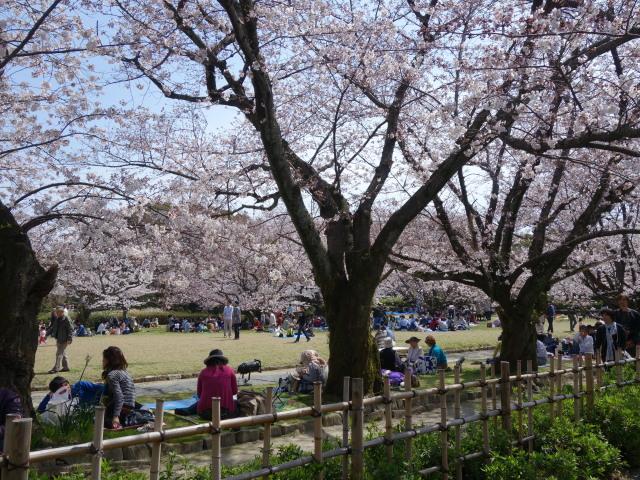 福岡城さくらまつり2015多聞櫓2