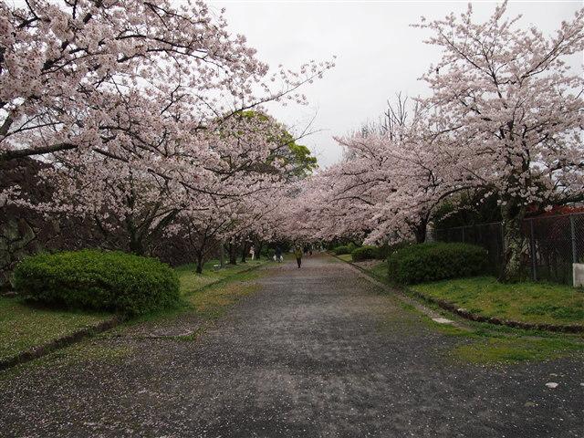 おおほりまつり2014-16