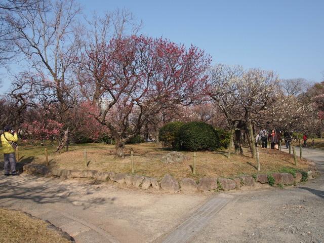 福岡城梅の花2014下4