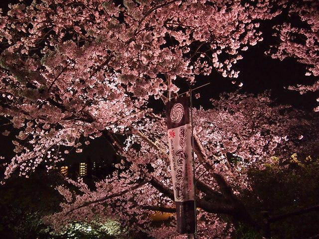 西公園桜2014-27