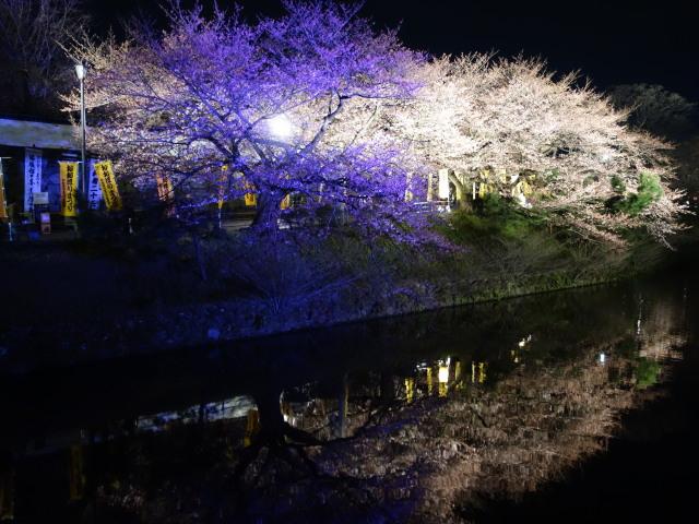 第7回 福岡城さくらまつり夜桜様子3