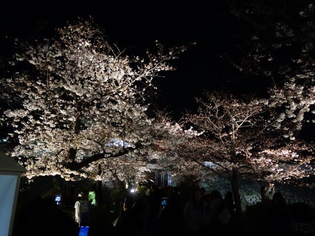 福岡城さくらまつり2015(夜桜)下之橋御門1