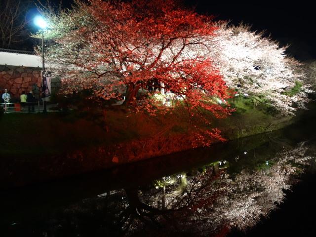 福岡城さくらまつり2015(夜桜)上之橋4