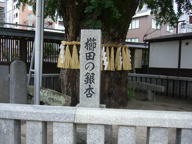 櫛田神社銀杏と碇石