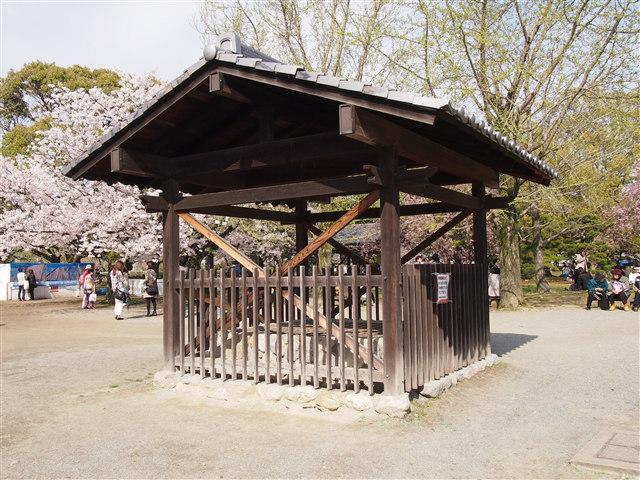 第5回 福岡城さくらまつり桜16