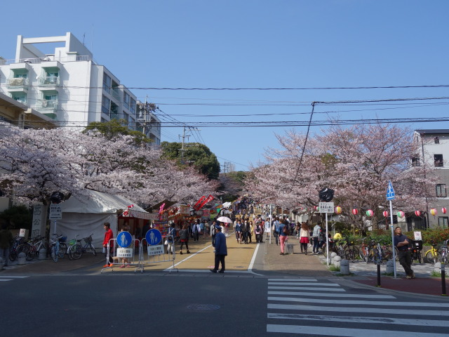 西公園桜2015-1